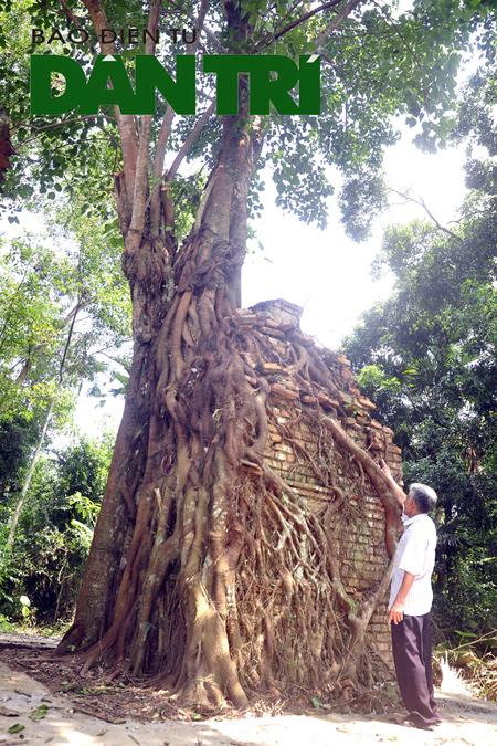 Kỳ bí cây bồ đề che chở am cổ hàng trăm năm tuổi - Ảnh 2.