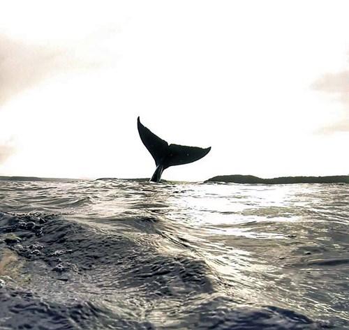 Gây sốt với bức ảnh tự sướng với cá voi - Ảnh 2.