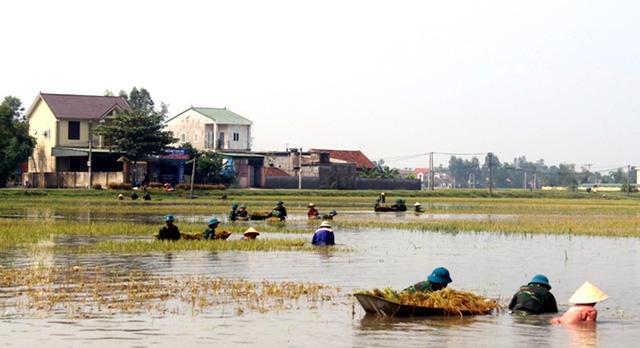 Nghệ An: Thanh niên, bộ đội dầm mình giúp dân gặt lúa sau bão - Ảnh 2.