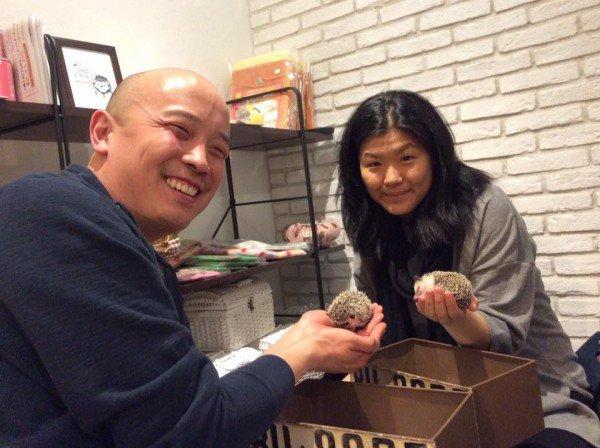 Nhật Bản mở quán cafe nhím đầu tiên trên thế giới - Ảnh 3.