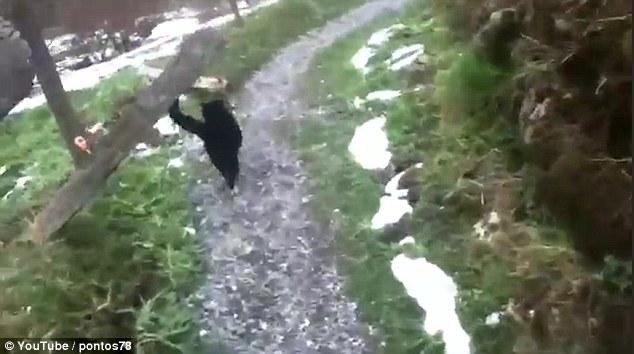 Chú mèo giúp du khách đi lạc tìm được đường về - Ảnh 3.
