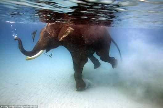 Khám phá những vịnh biển nước trong vắt như pha lê - Ảnh 3.