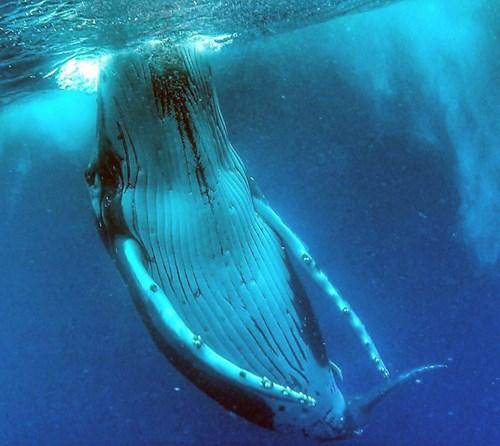 Gây sốt với bức ảnh tự sướng với cá voi - Ảnh 3.