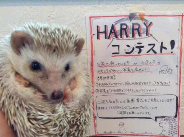 Nhật Bản mở quán cafe nhím đầu tiên trên thế giới - Ảnh 5.