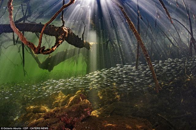 Đẹp mê hồn khoảnh khắc của thế giới đại dương - Ảnh 5.