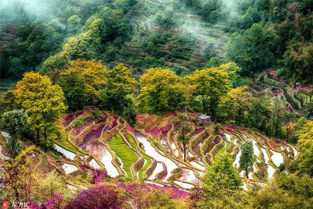Ngất ngây trước những thửa ruộng bậc thang sặc sỡ như cầu vồng ở Trung Quốc - Ảnh 4.