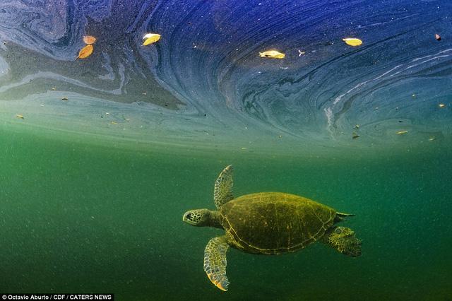 Đẹp mê hồn khoảnh khắc của thế giới đại dương - Ảnh 7.