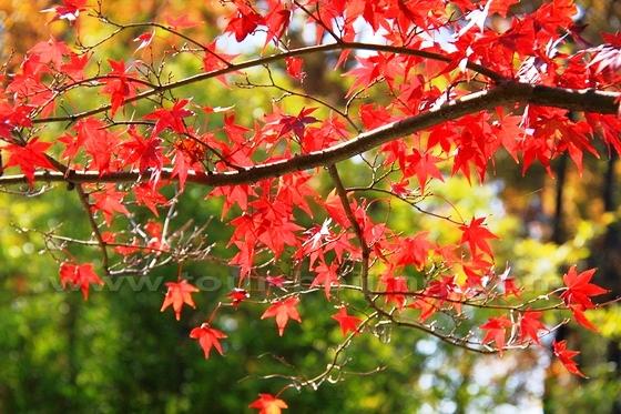 10 điểm ngắm mùa thu rực rỡ ở Trung Quốc - Ảnh 9.