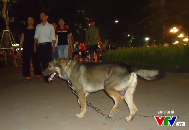 """Người Hà Nội vẫn """"thản nhiên"""" dắt chó không rọ mõm vào phố đi bộ - Ảnh 2."""