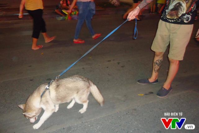 """Người Hà Nội vẫn """"thản nhiên"""" dắt chó không rọ mõm vào phố đi bộ - Ảnh 1."""