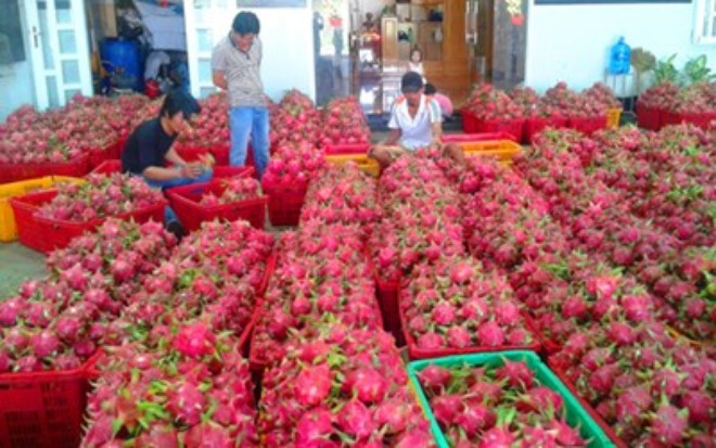 Nông sản xuất khẩu phụ thuộc một thị trường