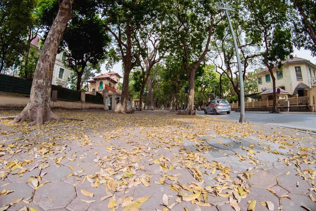 Con đường lãng mạn nhất Hà Nội đẹp ngỡ ngàng mùa cây thay lá - ảnh 7