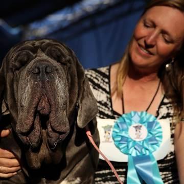 Thú vị cuộc thi... chó xấu nhất thế giới - Ảnh 2.