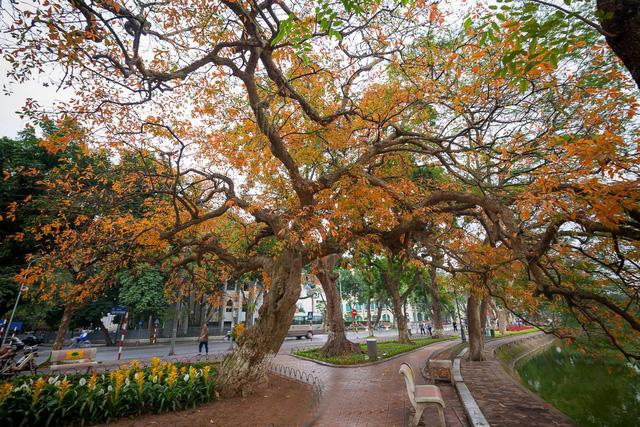 Ngỡ ngàng vẻ đẹp của Hà Nội trong tiết giao mùa tháng 4 - Ảnh 3.