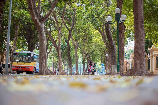 Con đường lãng mạn nhất Hà Nội đẹp ngỡ ngàng mùa cây thay lá - ảnh 2