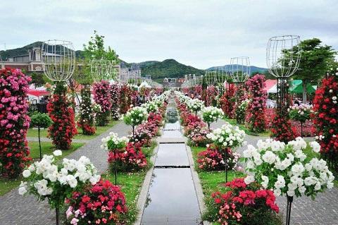 Lễ hội Hoa hồng Bulgaria: Người dân thất vọng tràn trề trong ngày đầu khai mạc - Ảnh 3.