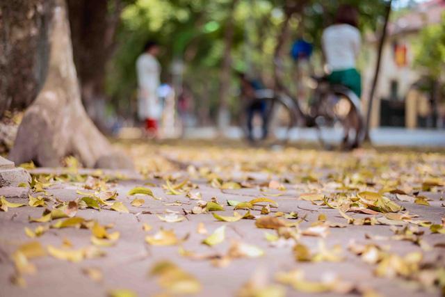 Con đường lãng mạn nhất Hà Nội đẹp ngỡ ngàng mùa cây thay lá - ảnh 4
