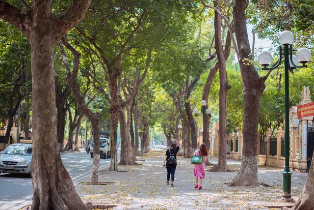 Con đường lãng mạn nhất Hà Nội đẹp ngỡ ngàng mùa cây thay lá - ảnh 3