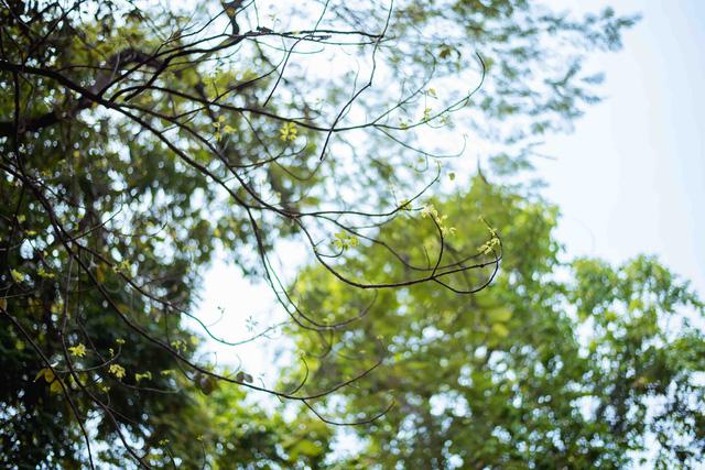 Con đường lãng mạn nhất Hà Nội đẹp ngỡ ngàng mùa cây thay lá - ảnh 10