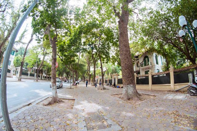 Con đường lãng mạn nhất Hà Nội đẹp ngỡ ngàng mùa cây thay lá - ảnh 5