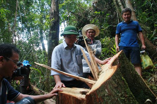 Quảng Nam: Khởi tố 20 bị can vụ phá rừng pơ mu - Ảnh 1.