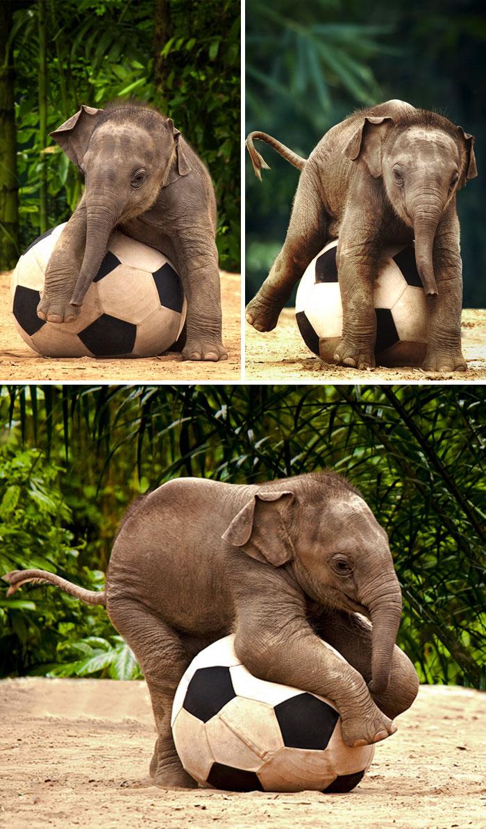 """N F Elephant 2 """"Tan chảy""""..."""