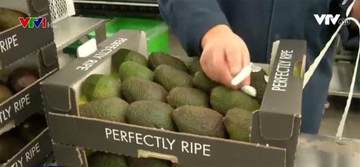 Chiếu laser vào quả bơ để tiết kiệm tem nhãn
