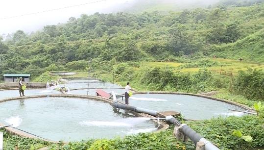 Cận cảnh quy trình nuôi cá hồi vân Sa Pa - Ảnh 1.