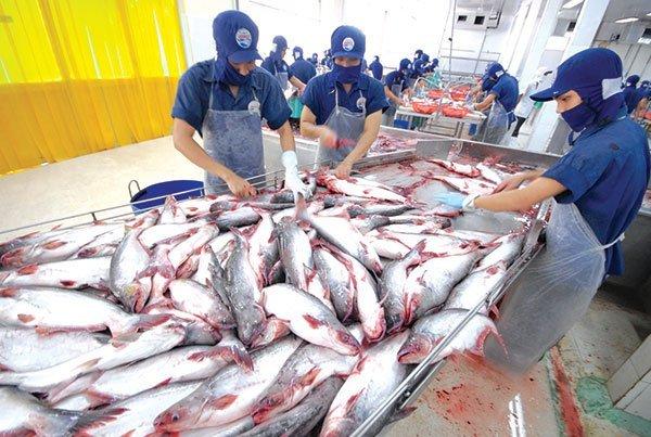 Mỹ kiểm tra nghiêm ngặt cá tra Việt Nam