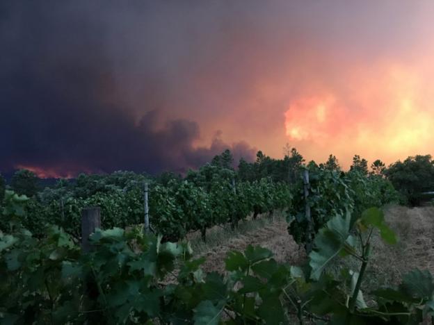 Cháy rừng ở Bồ Đào Nha: Số người thương vong đã lên tới hơn 100 - Ảnh 11.
