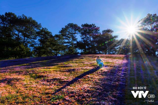 Mùa cỏ hồng đẹp như tranh ở Đà Lạt - Ảnh 7.