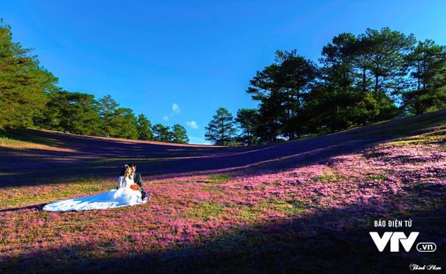 Mùa cỏ hồng đẹp như tranh ở Đà Lạt - Ảnh 6.