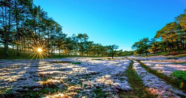 Mùa cỏ hồng đẹp như tranh ở Đà Lạt - Ảnh 2.