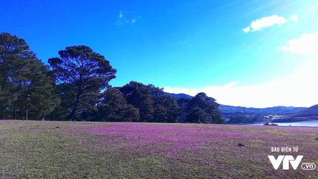 Mùa cỏ hồng đẹp như tranh ở Đà Lạt - Ảnh 9.