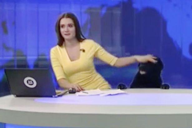Phấn khích vì được làm khách mời trên TV, chú chó này phá luôn bản tin thời sự - Ảnh 1.