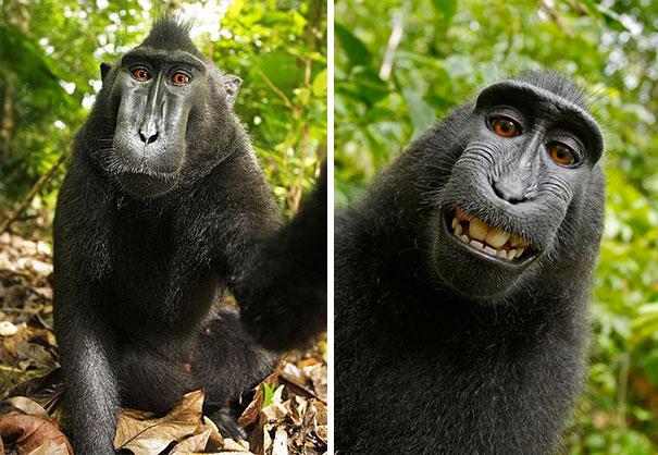 Không chỉ con người, các loài vật cũng có ảnh selfie cực chất - Ảnh 3.