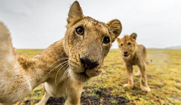 Không chỉ con người, các loài vật cũng có ảnh selfie cực chất - Ảnh 11.