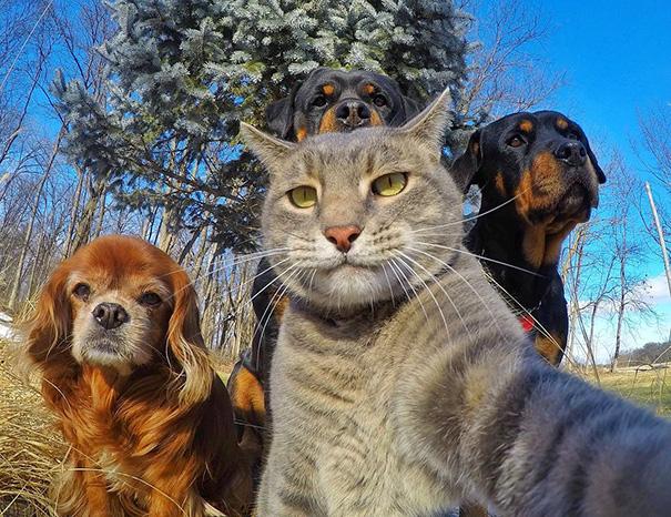 Không chỉ con người, các loài vật cũng có ảnh selfie cực chất - Ảnh 1.