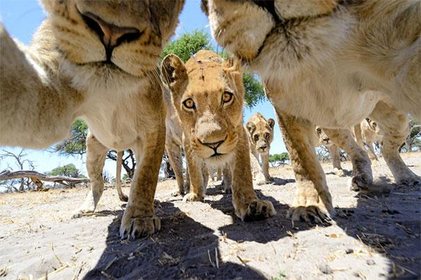 Không chỉ con người, các loài vật cũng có ảnh selfie cực chất - Ảnh 7.