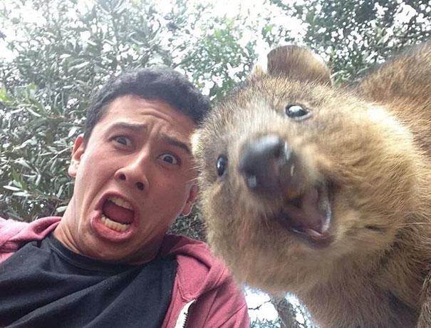Không chỉ con người, các loài vật cũng có ảnh selfie cực chất - Ảnh 4.