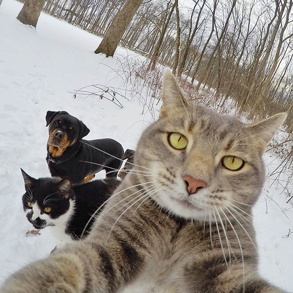 Không chỉ con người, các loài vật cũng có ảnh selfie cực chất - Ảnh 2.