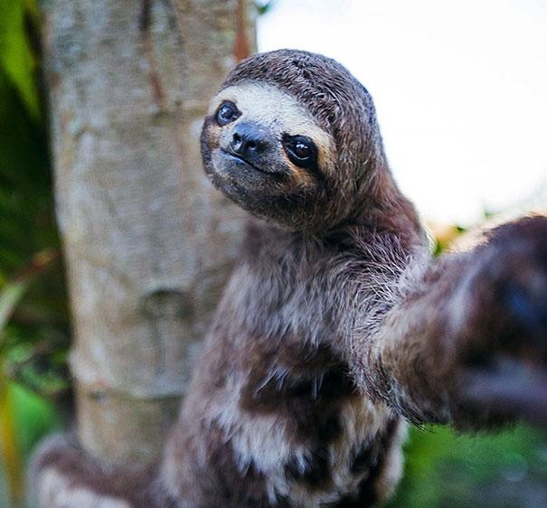 Không chỉ con người, các loài vật cũng có ảnh selfie cực chất - Ảnh 5.
