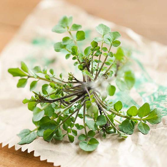 Những loại thảo dược, gia vị tốt cho não bộ - ảnh 1
