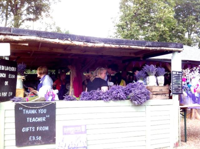 Mô hình kinh doanh vườn hoa oải hương ở Anh - Ảnh 4.