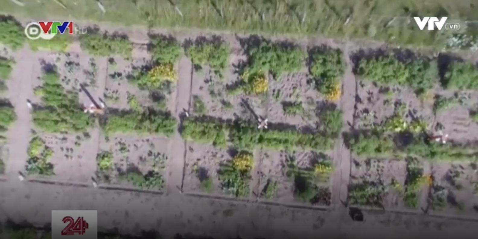 Trồng vườn ảo, gặt hái được nông sản thật