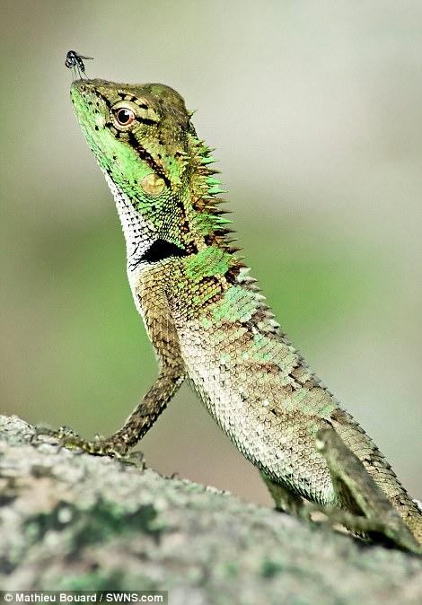 Những bức ảnh xuất sắc về động vật trong tự nhiên - Ảnh 6.