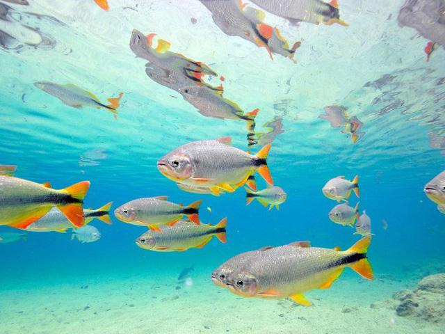9 bãi biển nước trong nhất thế giới - Ảnh 1.