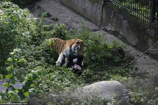 Hổ đói vồ nữ nhân viên vườn thú ở Nga - Ảnh 1.