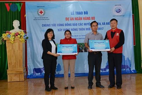 Tặng bò cho nông dân nghèo tỉnh Lâm Đồng - Ảnh 1.