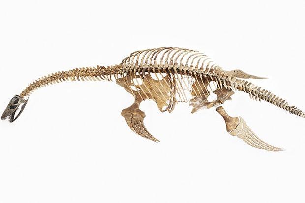 Xác loài vật 150 triệu năm tuổi giống hệt Quái vật hồ Lochness - Ảnh 2.